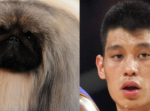 Will Malachy The Pekingese Do For Chinese Dogs In America What Jeremy Lin Has Done For Chinese American Men?