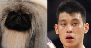 Jeremy Lin and Pekingese