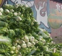 Picture of the Day: Cabbage
