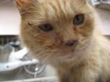 Beijing Zoo: Cat Eyes