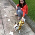 Dog in stripes