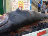 A Shandong College Canteen Served Its Unsuspecting Students Whale Meat