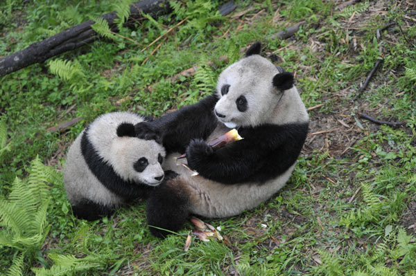 For the first installment of Global Times Erotic Panda Fiction, see here.