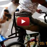Cat In A Hat Sits On Back Of A Bike, Is Awesome
