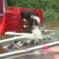 "Before You Eat These Pigs, Watch Them Participate In A ""London Olympics"" Swim Meet"