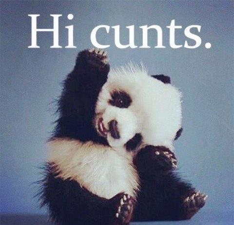 Hi cunts.