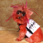This Is Probably The Ugliest Dressed Dog You'll Ever See