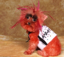 This Is Probably The Ugliest Dressed Dog You&#8217;ll Ever See
