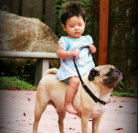 Girl On Pug