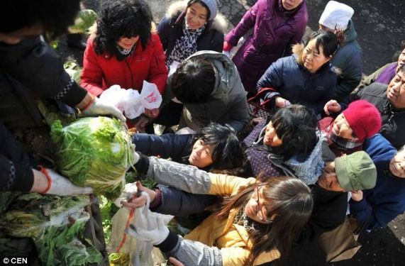 Daily Mail Taiyuan cabbage 1