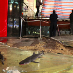 Cue Jaws Music: Shark Tank Bursts On Shanghai Pedestrian Street