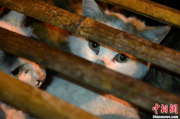 Changsha cats 1