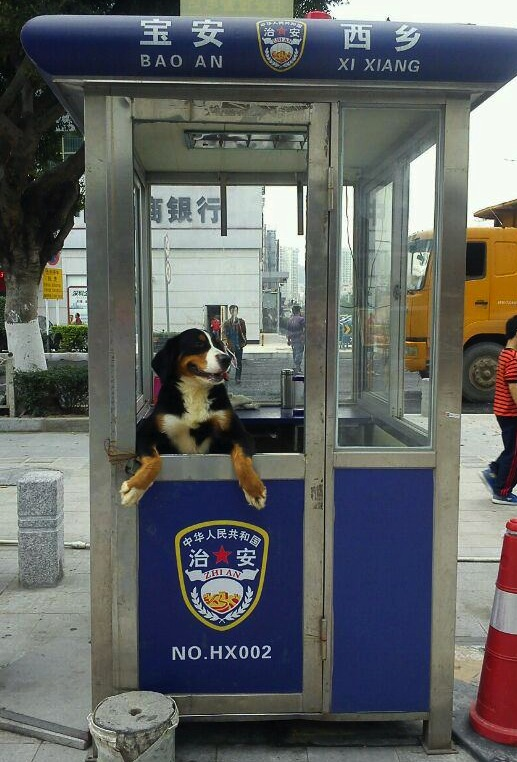 Dog in booth