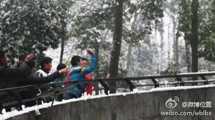 Hangzhou zoo-goers snowballs at lions