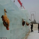 Jilin chickens as targets 1