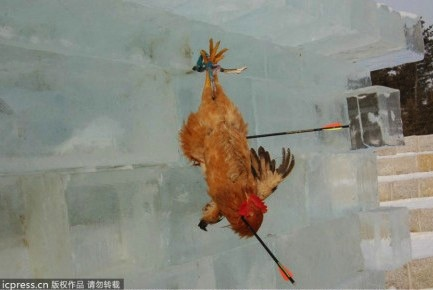 Jilin chickens as targets 4