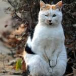 Nanjing cat