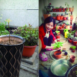Arbor Day in China