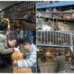 Dogs In Chongqing Still Waiting To Be Rescued As Netizens Launch Social Media Campaign
