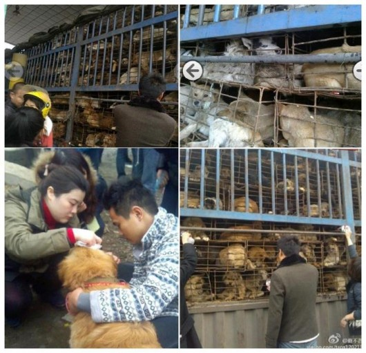 Chongqing dogs needing rescue 1