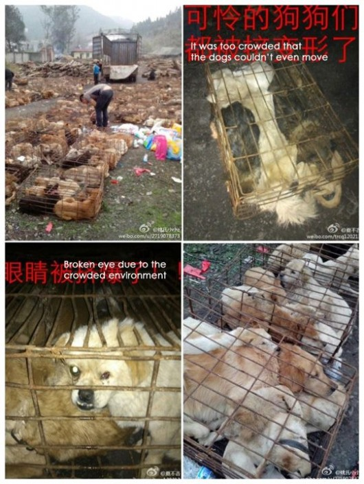 Chongqing dogs needing rescue 4