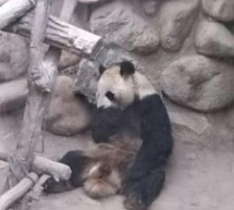 This Is The Saddest Fucking Panda