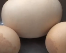 Guizhou Chicken Lays Half-Pound Egg, Which Had An Egg Inside It