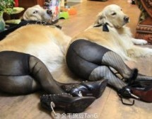 What The Fuck? Oh, It's Just Dogs In Pantyhose