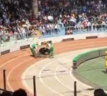 All Sorts Of Awful: Black Bear Mauls Monkey After Bikes Collide At Shanghai Wild Animal Park [UPDATE]