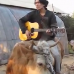 Chinese man riding cow delivers perfect rendition of Bieber's Baby