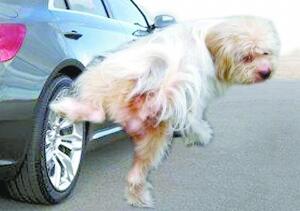 Dog piss photoshop