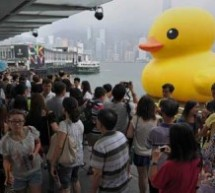 The Duck Has Left Victoria Harbor