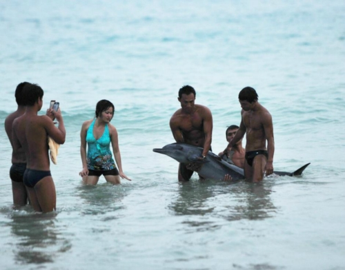 Posing with dolphin 4