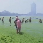 Pollution Contributes To Record-Settling Algal Bloom In Yellow Sea
