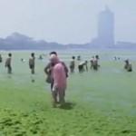 Algal bloom in Qingdao