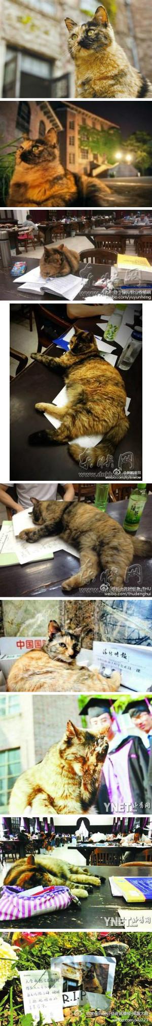 Tsinghua Cat Curator