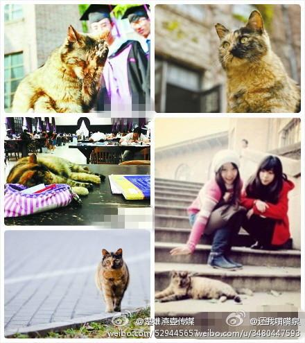 Tsinghua scholar cat pics