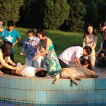 Beijing Chaoyang pet pool dog death