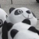 Pandas in Berlin 2c