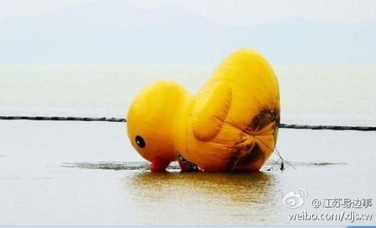 Duck falls beak-first into water 2