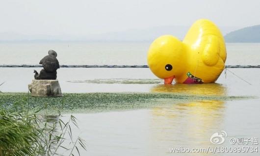 Duck falls beak-first into water