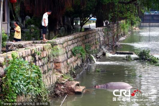 Hippo in Shantou 1