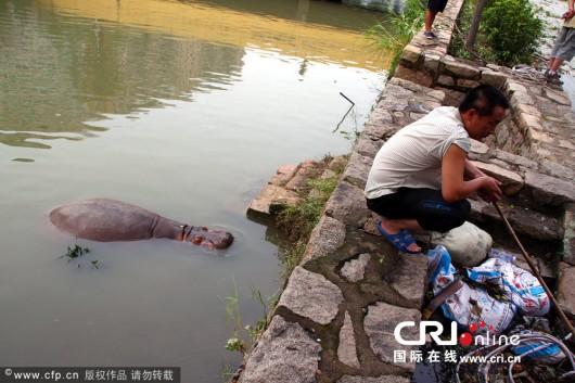 Hippo in Shantou 2