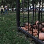 Severed Heads. Severed Heads In A Cage