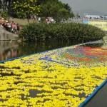 50,000 rubber ducks in Shenzhen