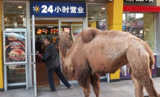 Beggar with camel