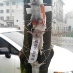 Three Mice Tied To A Tree In Chengdu