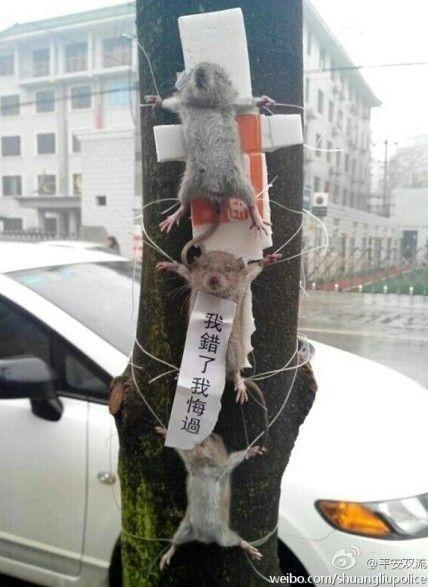 Three mice tied to a street tree