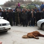 Police Are Now Using Pistols And Shovels To Kill Tibetan Mastiffs