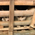 Wuxi kittens released into forest